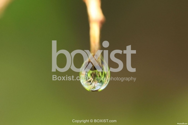Water Drop with Grass Reflection