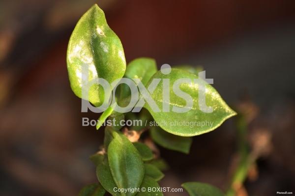 Fresh Shiny Green Plant