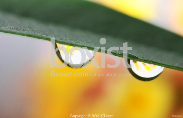 Two Water Drops
