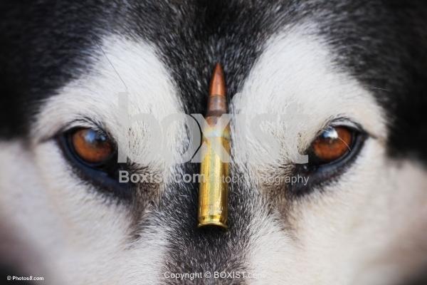 Bullet between the Dog Eyes