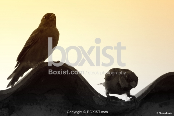 Two Birds Silhouette