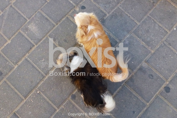 Two Dogs in the Street