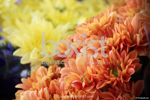 Bunch of Orange and Yellow Flowers