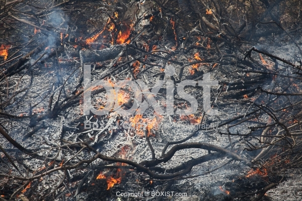 Burned Branches in Ashes