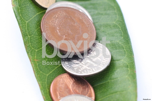 Money Coins on Green Leaf