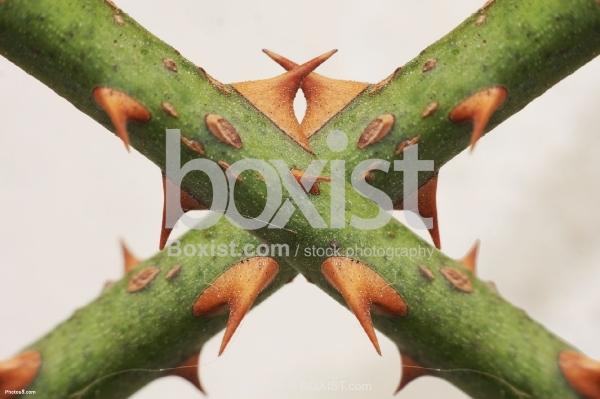 Thorns Cross