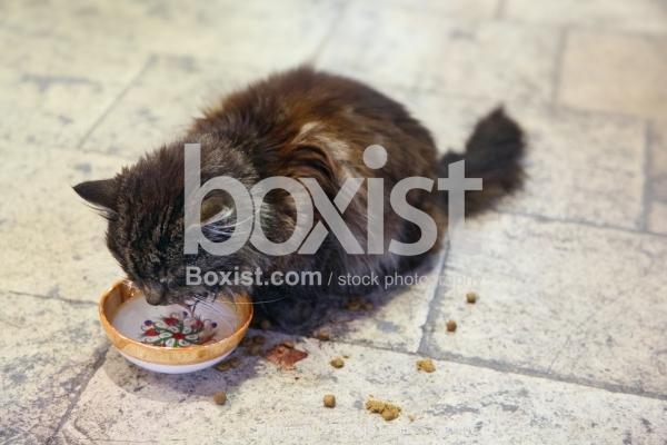 Homeless Kitten Eating