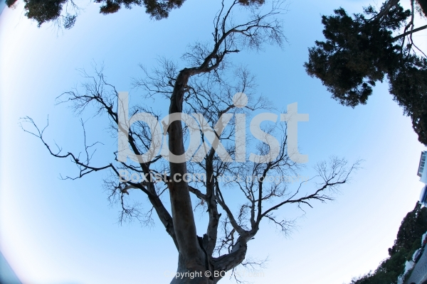 Tree with Fisheye Effect