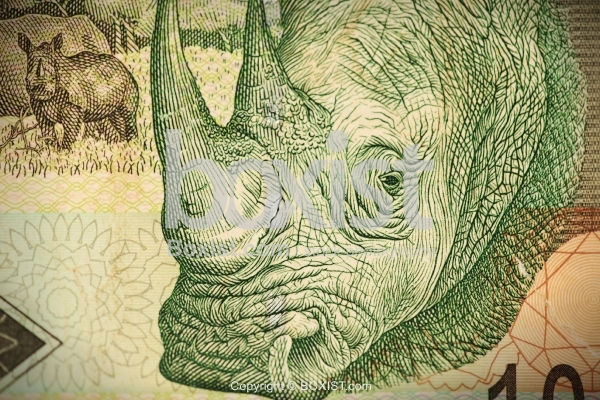 African Rhino on South African Money