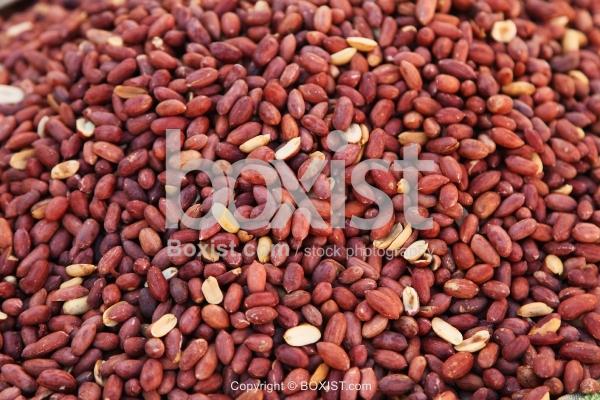 Fresh Raw Peanuts