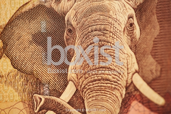 Elephant Portrait on Twenty South African Rand