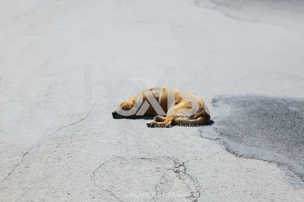 Lonely Dog Sleeping in the Street