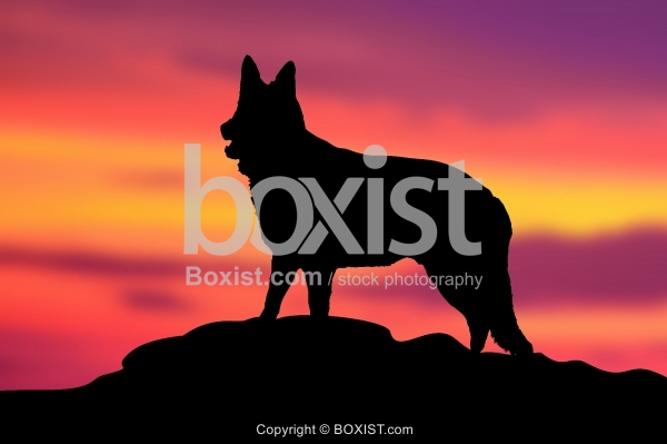 Dog On Hill At Sunset