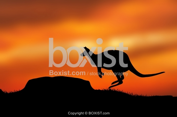 Kangaroo Jumping At Sunset