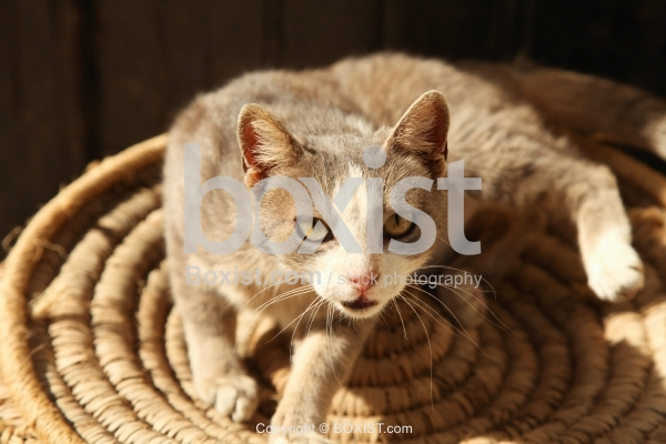 Beautiful Domestic Cat