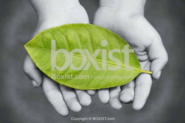 Child Hands Holding Large Green Leaf
