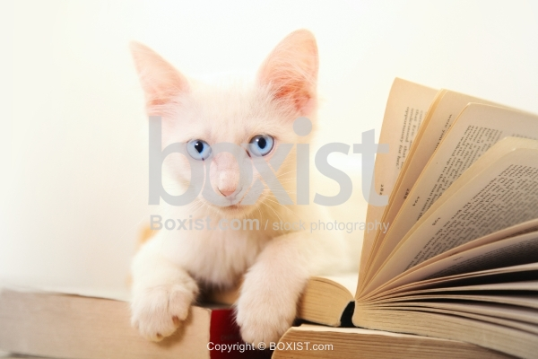 Little Kitten Sitting On Stack Of Books