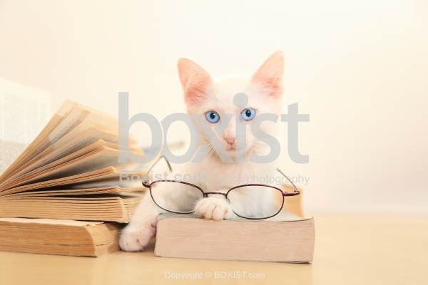 White Cat Sitting Over Book