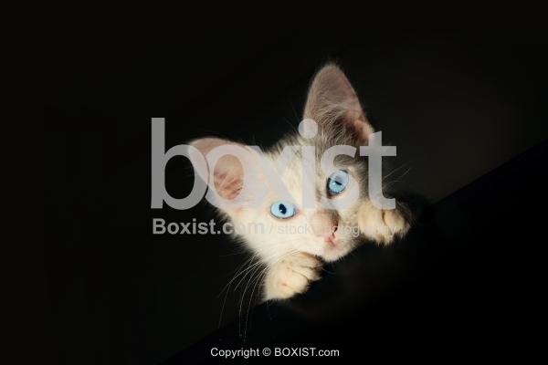 White Kitten In The Dark