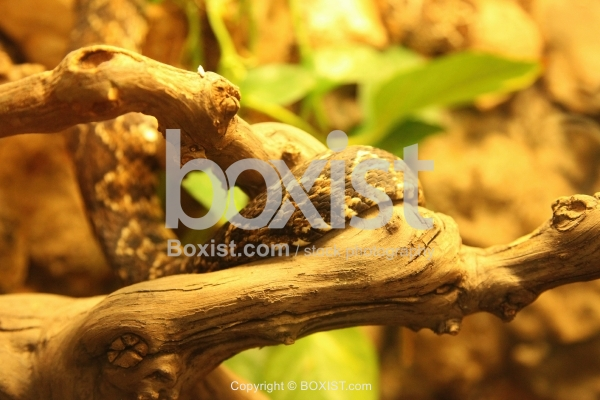 Snake On Tree Branch