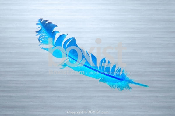 Blue Feather On Wood Background