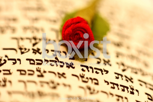 Red Rose On Top Of Hebrew Script