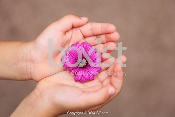 Two Hands Holding Purple Flower