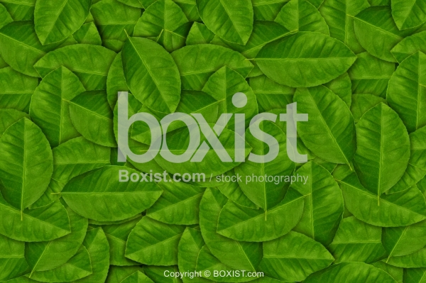 Stack Of Green Leaves Background