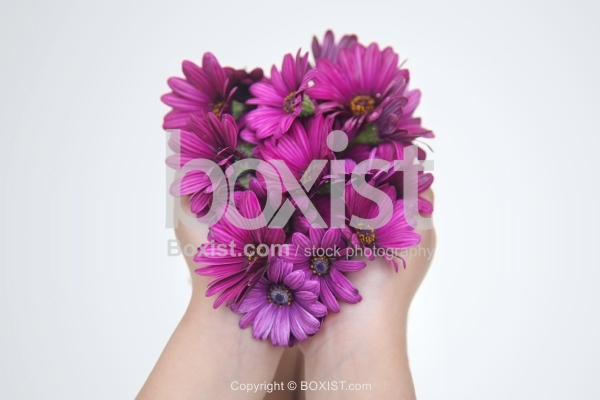 Hands Holding Purple Daisybush Flowers