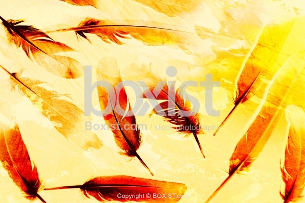 Abstract Grunge Feathers Background