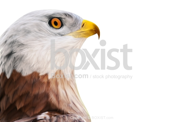 Eagle Head Portrait Painting Artwork