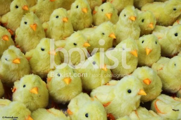 Yellow Chicks Toys
