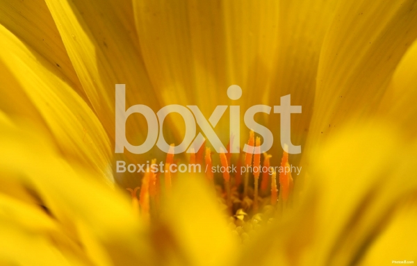 Yellow Color Flower Background