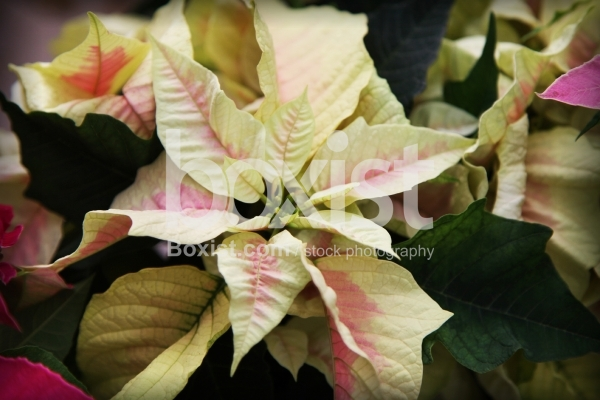 Yellow Exotic Plant Leaves